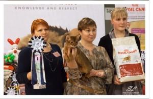 Международное шоу кошек Кубок «Каменный цветок»